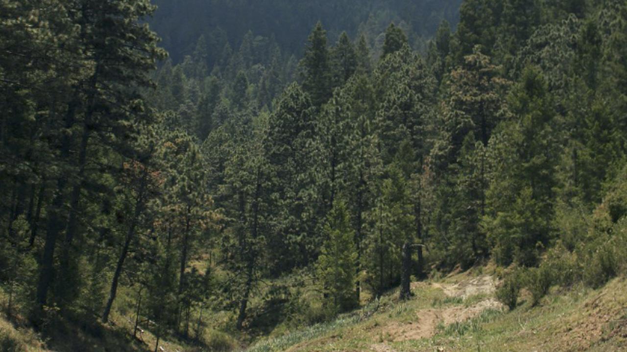 Preservar los bosques